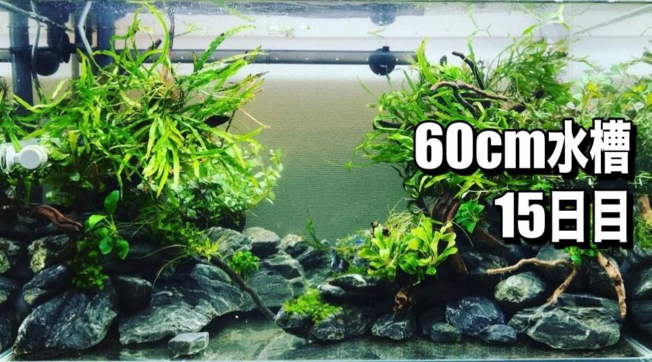 センチ 水槽 60