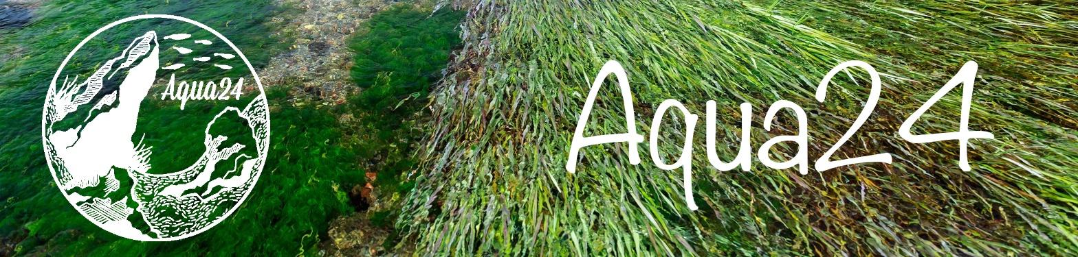Aqua24アクアリウム